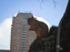 esquilo Houston